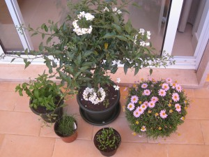 Various plants including jasmine