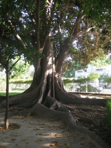 Holiday in Seville - Tree Roots in Maria Luisa Park