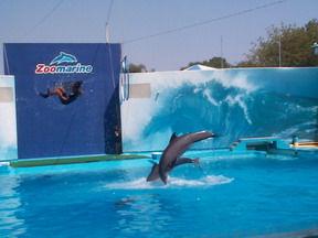 Zoomarine Algarve - Dolphins