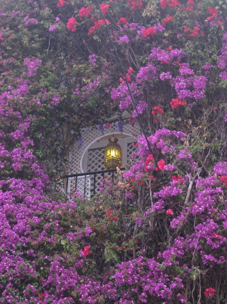 Flowers in Marbella