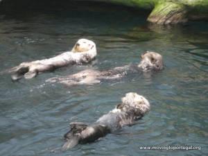 Otters at Lisbon Oceanarium